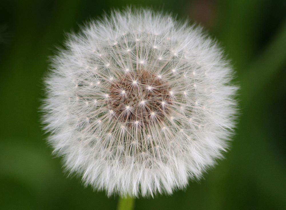 Allergie di primavera, come mettersi al riparo dai pollini nel periodo di picco