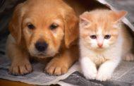 Da oggi anche cani e gatti possono avere un conto corrente