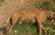 Ritrovato nella frazione di Torretta Granitola un cane randagio crivellato di colpi di fucile