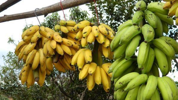 Dal Giappone arriva la crio-banana: si mangia anche la buccia
