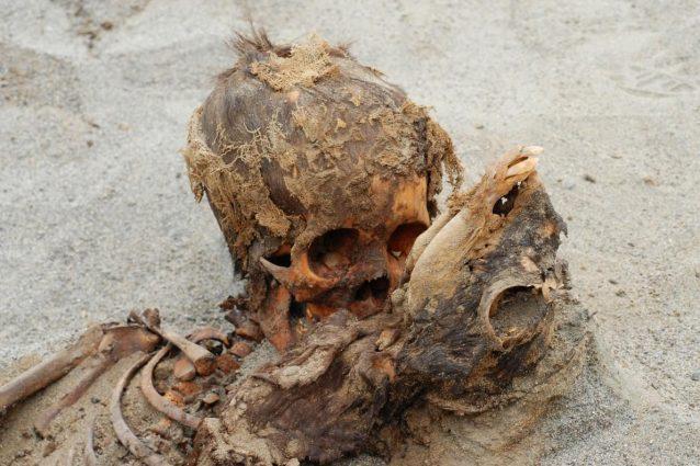 Macabro ritrovamento in Perù: scoperti gli scheletri di 140 bimbi, con loro anche 200 lama