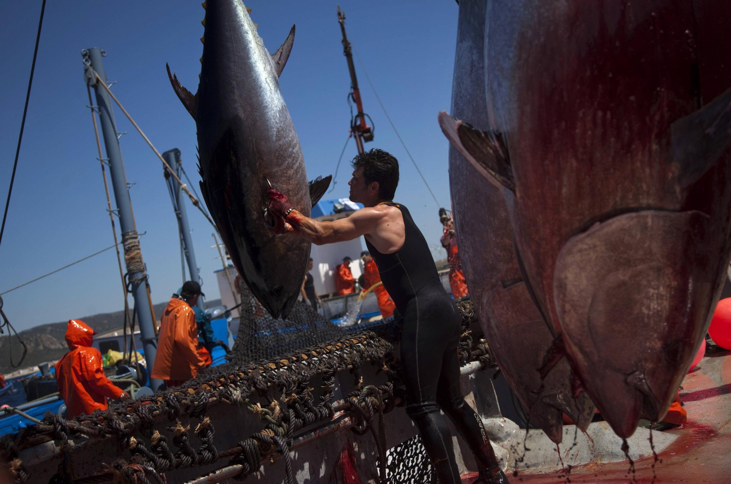 Giunta Musumeci impugna decreto sulle 'quote tonno', nuovo scontro fra Palermo e Roma