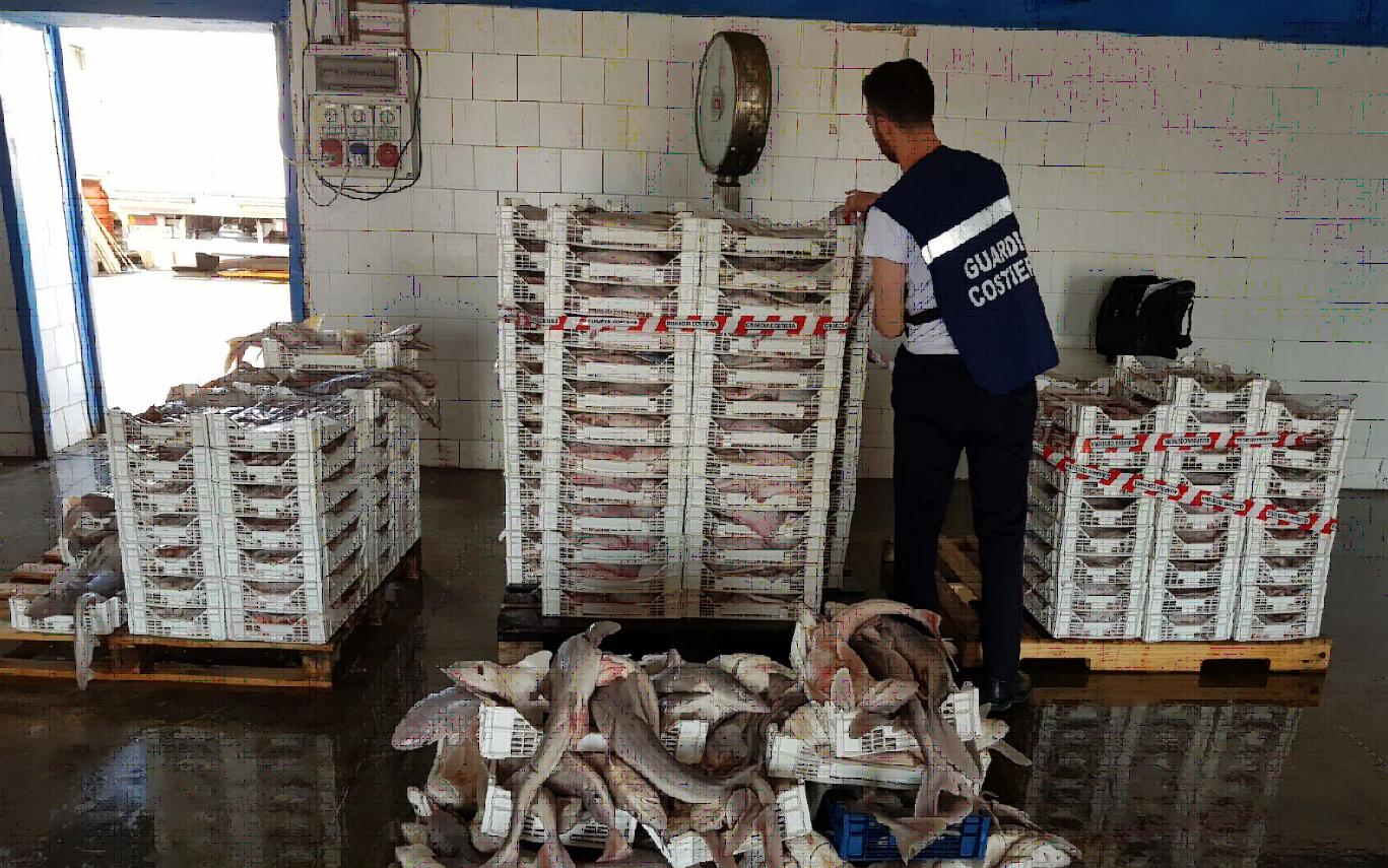 A Bari sequestrato 1500 chili di pesce privo di rintracciabilità proveniente da Mazara