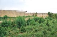 Mazara. Arresto in flagranza di un cittadino mazarese per coltivazione e produzione di sostanza stupefacente del tipo marijuana