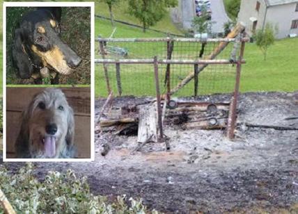 Abbaiavano troppo, bruciati vivi due cani.