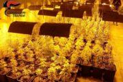 Cinque arresti per spaccio e coltivazione di sostanze stupefacenti