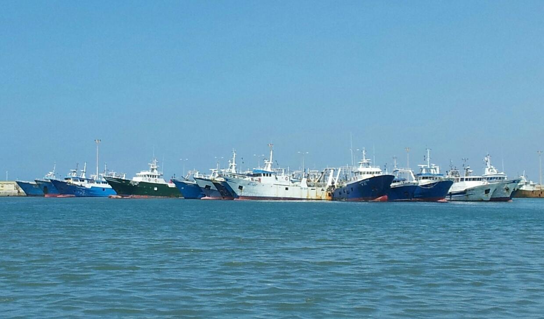 Mazara. Tonnellate di scarti di pesce a perdere. Imminente la demolizione di 25 imbarcazioni