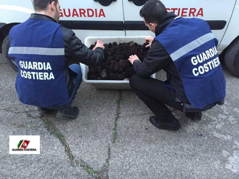"""La truffa della polpa dei ricci """"allungata"""" con la carota: sequestri, denunce e arresti"""