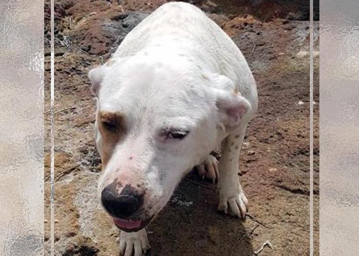 Getta cane in acqua con una grossa pietra al collo, denunciato. E' accaduto nel trapanese