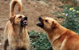 Turista aggredita e ferita da cani randagi a Sciacca: