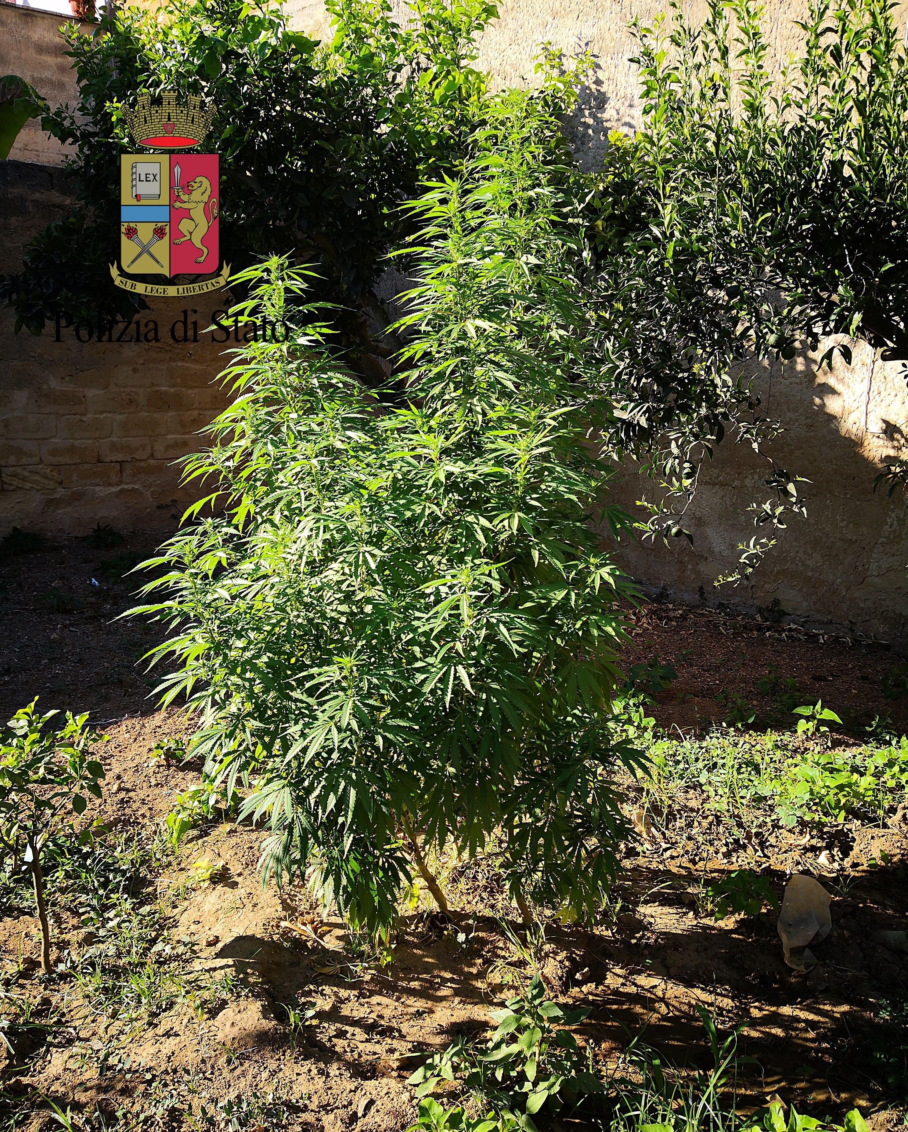 Mazara. Arresto in flagranza di due cittadini mazaresi per coltivazione e detenzione ai fini di spaccio di sostanza stupefacente del tipo marijuana