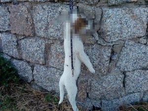 Un cucciolo di cane di appena due mesi è stato barbaramente impiccato