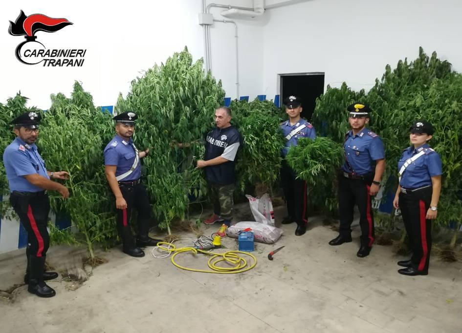 Mazara. Due arresti per coltivazione e spaccio di marijuana