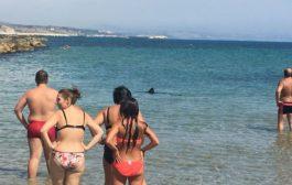 Due squali in spiaggia a Sciacca, panico
