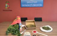 Mazara. Arresto in flagranza di un cittadino mazarese per coltivazione di cannabis indica e detenzione a fini di spaccio di sostanza stupefacente del tipo marijuana