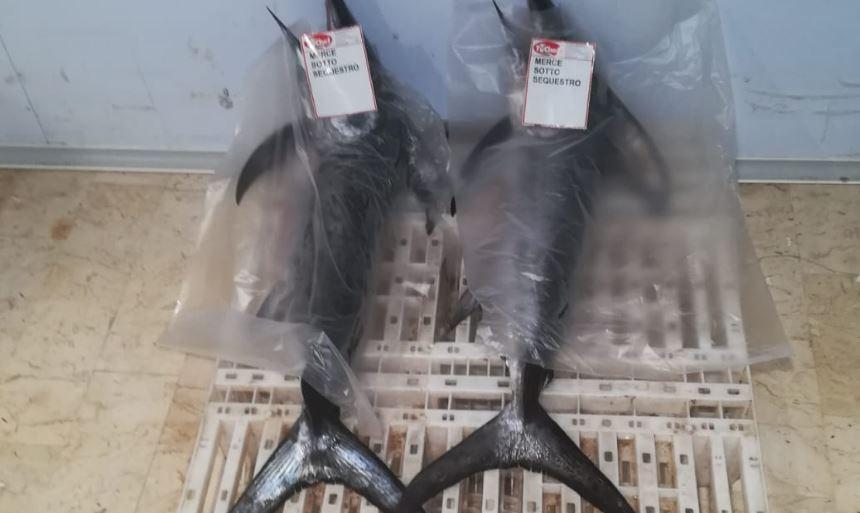 Sorpreso un peschereccio di Mazara intento in uno sbarco irregolare di Pesce Spada. Multa di 8000 euro