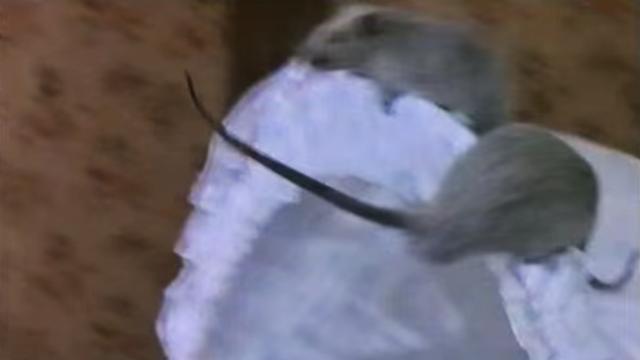 Bambina di 7 mesi mangiata viva dai topi mentre riposava nel suo lettino