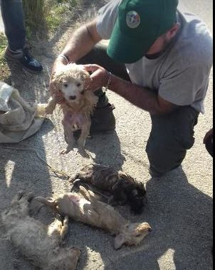 Mazara. Cuccioli vivi buttati dentro i sacchetti nel fiume. Uno salvato gli altri morti