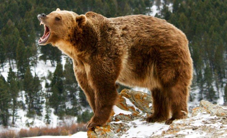 Passeggiata finisce in tragedia: mamma e figlioletta di 10 mesi uccise da un grizzly
