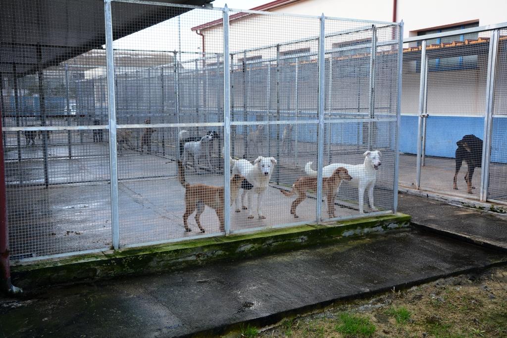 Record di adozioni di cani a Mazara