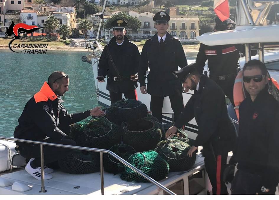 Sequestrati 15000 ricci di mare
