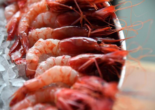 Pesca sostenibile, il gambero rosso di Mazara diventa nettare