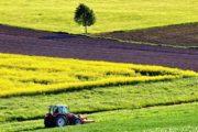 Il presidente della Regione, Musumeci, ha presentato 15 nuovi bandi che mettono a disposizione degli imprenditori agricoli siciliani quasi 146 milioni di euro