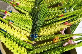 Domenica delle Palme: allarme palme avvelenate in vendita