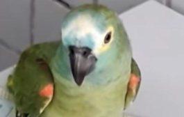 Un pappagallo viene coinvolto in traffici di droga. Arrestato!
