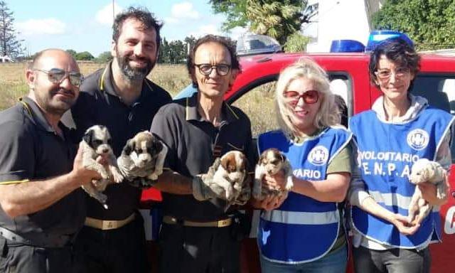 Mazara. Cinque cuccioli salvati dalle fiamme. Intervento provvidenziale dei Vigili del Fuoco