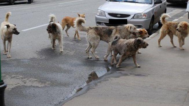 Mazara. La IV Commissione Consiliare ha affrontato la questione randagismo in città