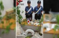 Mazara, servizio antidroga dei Carabinieri: un arresto e una denuncia