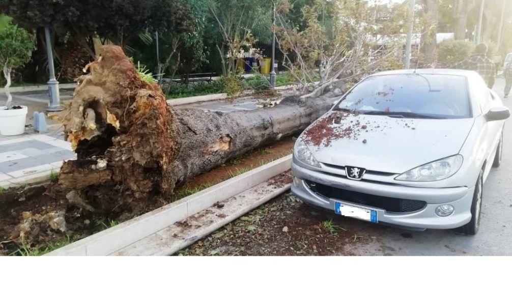 Mazara, rientra l'emergenza maltempo. Interventi nel lungomare per due alberi, uno caduto l'altro pericolante, ed in via della Pace per mettere in sicurezza un palo della luce
