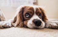 Mazara. Ordine del Giorno del Gruppo Partecipazione Politica su Anagrafe Canina