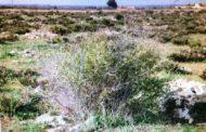 Mazara. Ammesso dalla Regione il progetto per il restauro naturalistico di un'area di contrada Affacciata. Investimento previsto di circa 3 milioni di euro