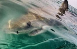 Turista scozzese divorato da uno squalo nell'Oceano indiano: l'animale trovato morto in spiaggia