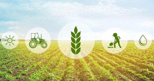 AGRICOLTURA, 40 MILIONI PER INVESTIMENTI NELLE AZIENDE SICILIANE
