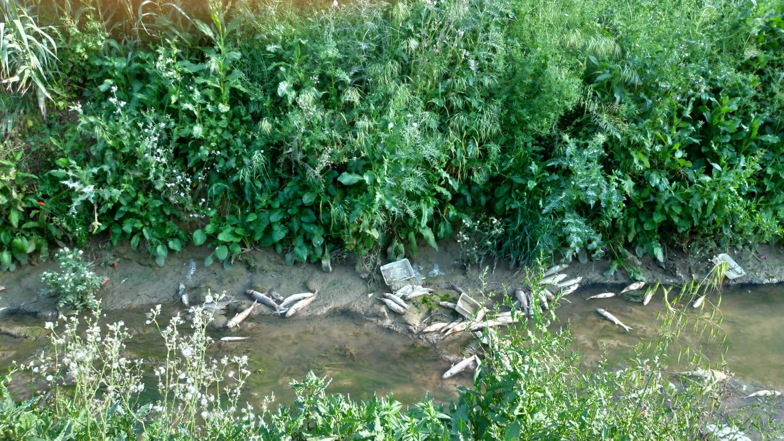 Mazara. Moria di cefali lungo il fiume che si sta prosciugando