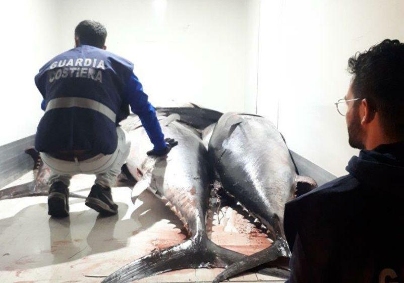 Marsala. Pesca illegale di Tonno rosso: sequestrati 15 esemplari per oltre 18 quintali