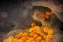 Mazara. Regolamentazione acquisto e distribuzione derrate alimentari a famiglie bisognose. L'Amministrazione comunale stanzia 40mila euro