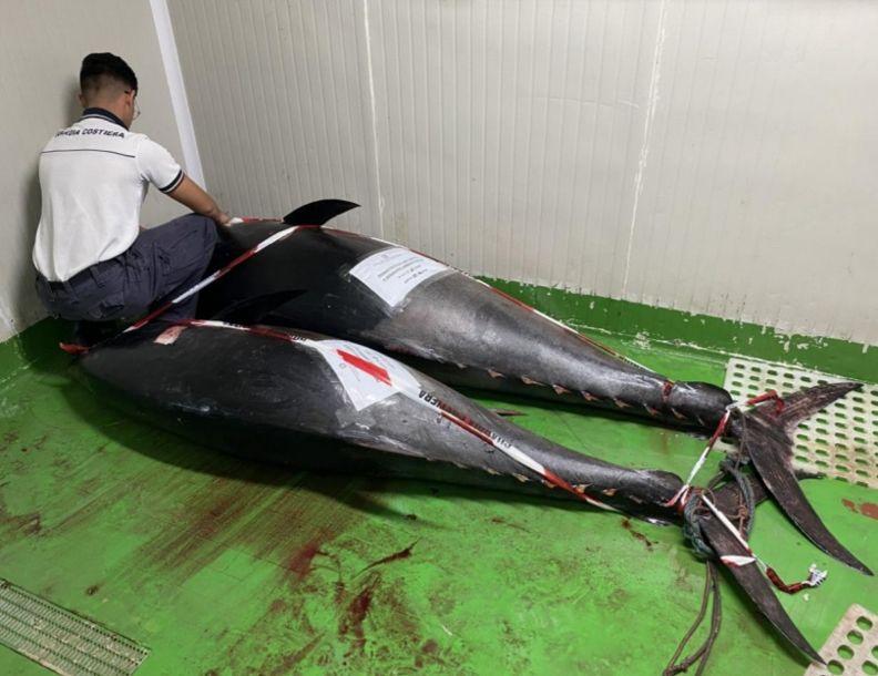 Mazara. La Capitaneria di porto sequestra esemplari di tonno rosso e li dona in beneficenza