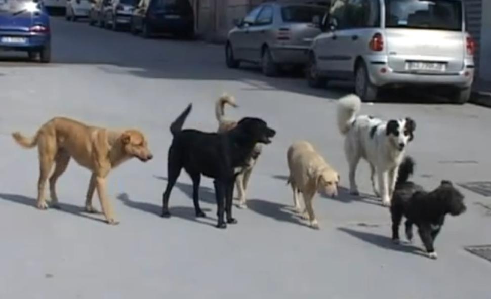 Mazara, uomo aggredito e ferito da cani randagi sul Lungomare