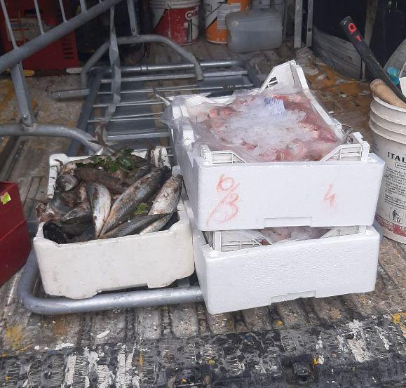 Mazara. Controlli antiabusivismo commerciale piazzetta dello Scalo. Sequestrato prodotto ittico