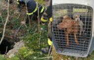 Mazara. Eroico salvataggio di due cani finiti dentro un pozzo profondo dieci metri