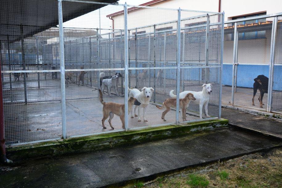 Mazara. Avviso di manifestazione d'interesse per la gestione annuale del Rifugio Sanitario per Cani