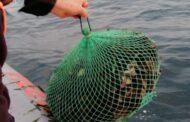 Operazione congiunta della Polizia Stradale di Alcamo e della Guardia Costiera di Mazara contro la pesca abusiva dei ricci di mare.