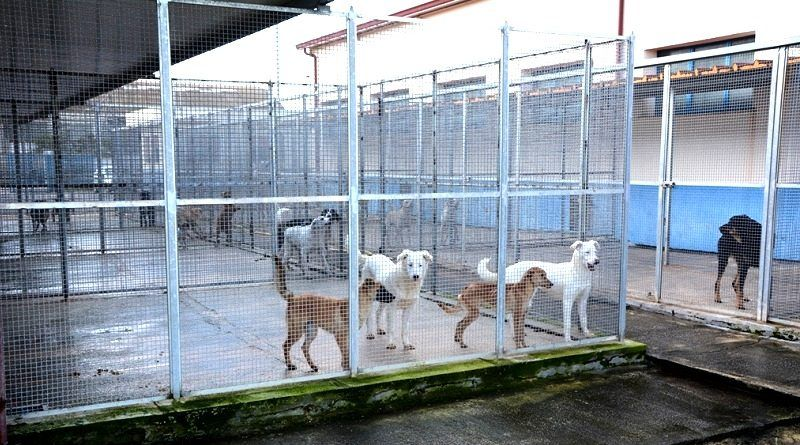 Mazara. Potenziato l'impianto di allarme del Rifugio Sanitario per cani