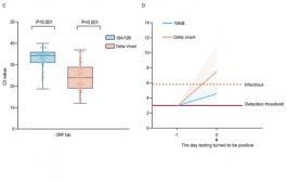 Perché la variante Delta è così contagiosa: carica virale 1.000 volte superiore e tempo di incubazione ridotto